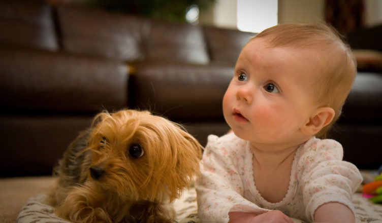 Dogs Babies and Toddlers